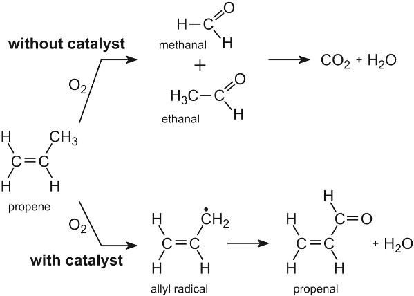 enzyme catalyst examples